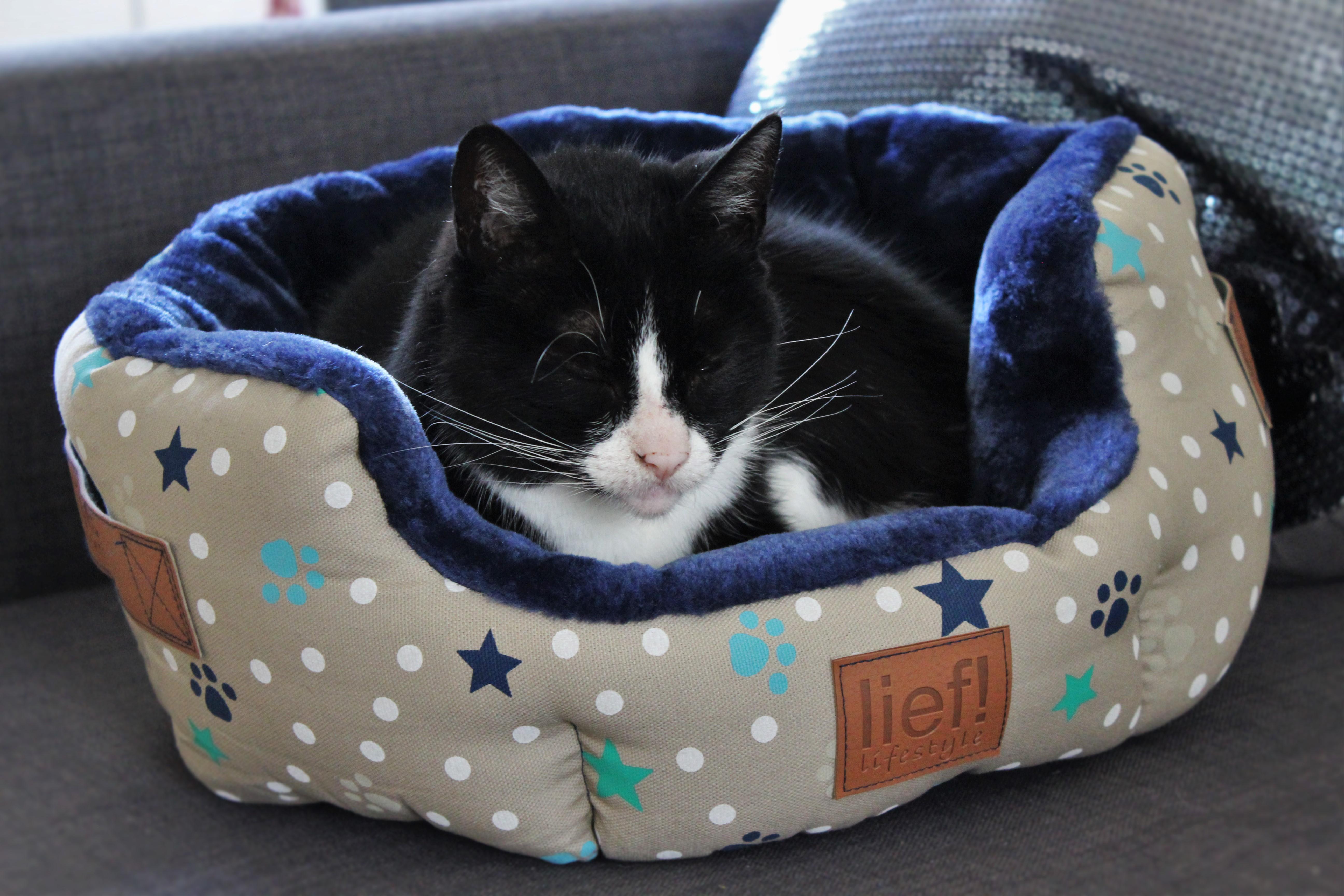 Taffie in de spotlight | Nieuwe kattenspullen