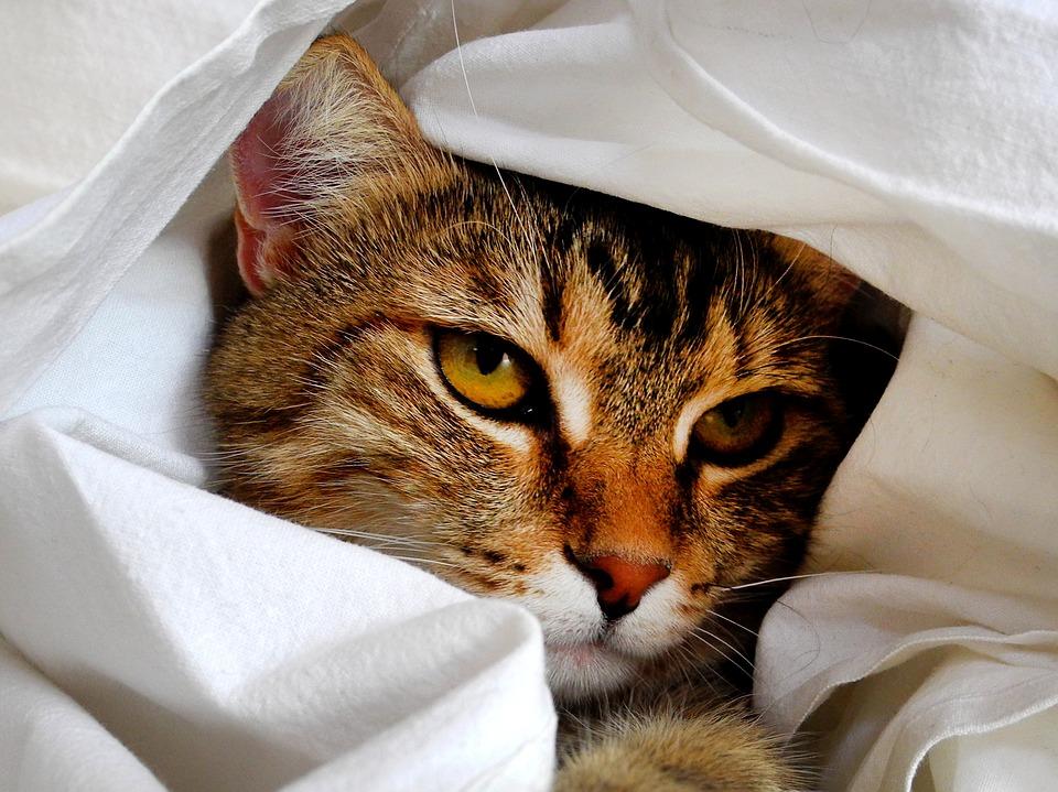 cat-1461372_960_720