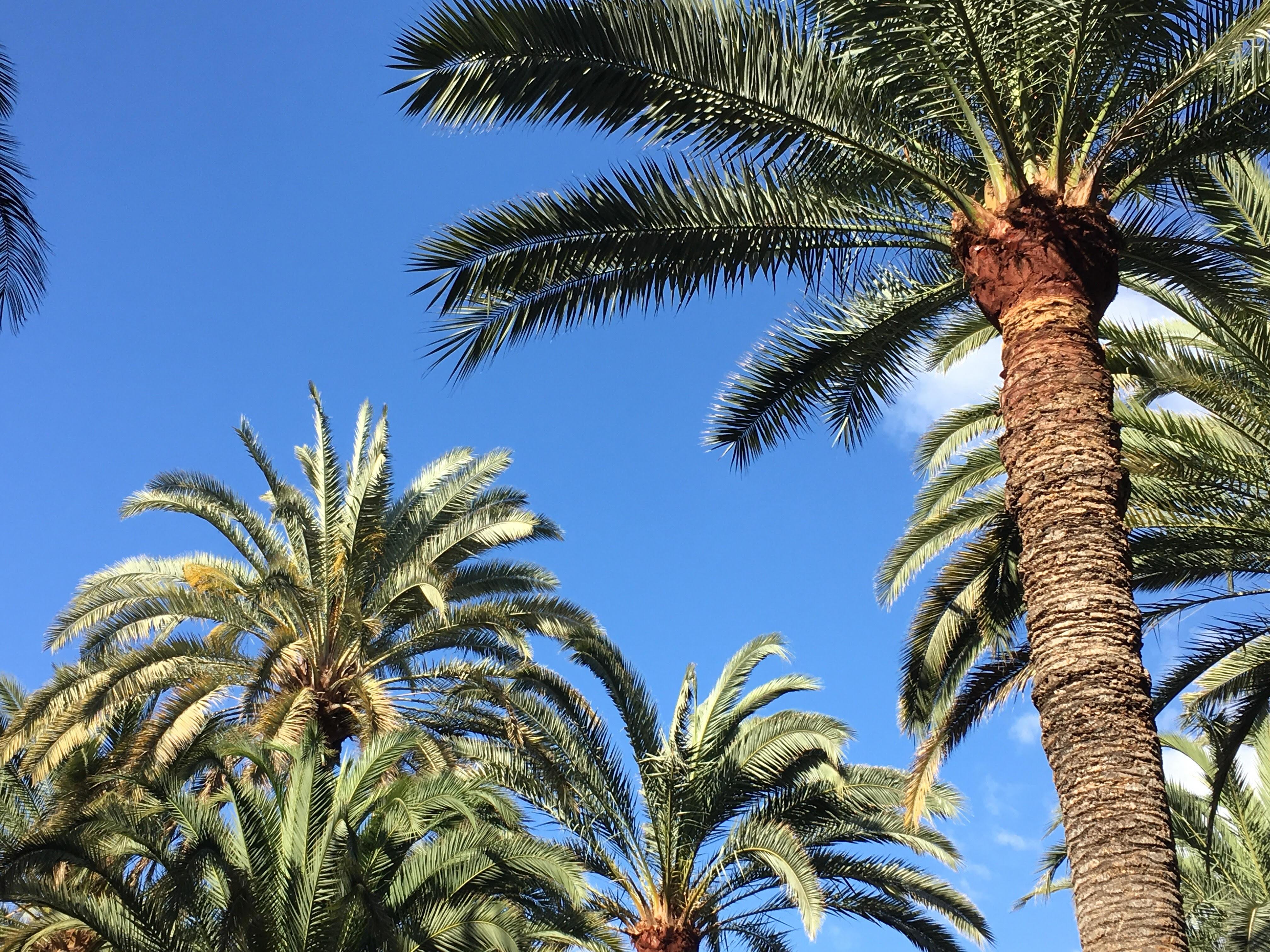 GRAN CANARIA | vakantie & shoplog!