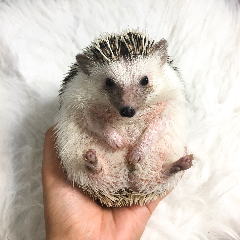 Update: een egel als huisdier | Hoe gaat het met Jannie