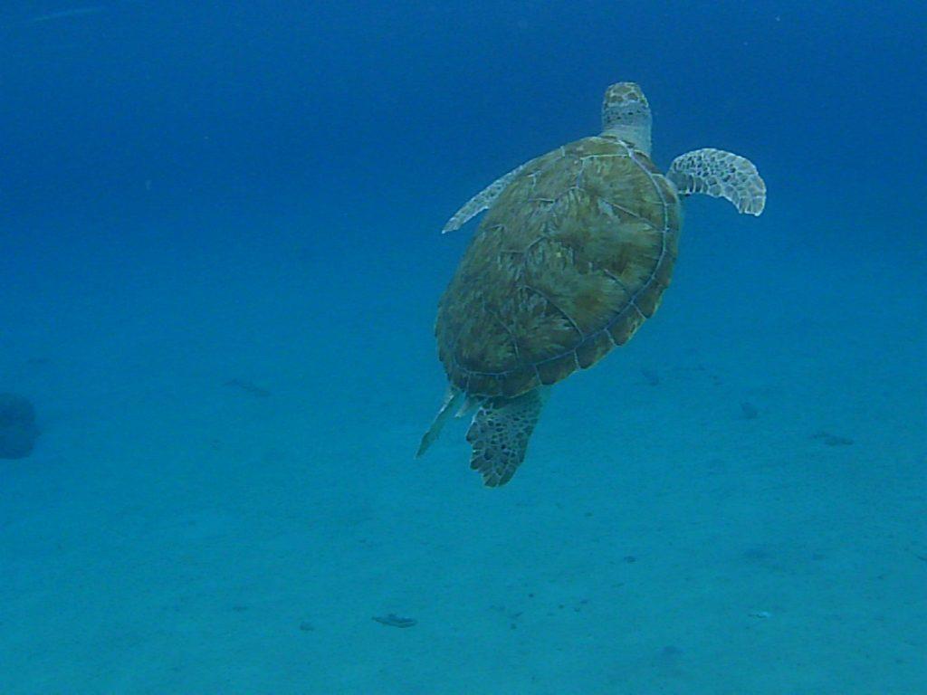 curacao zwemmen met schildpadden 2019