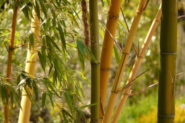 Kleding van bamboe, wat heb je daar nou precies aan?