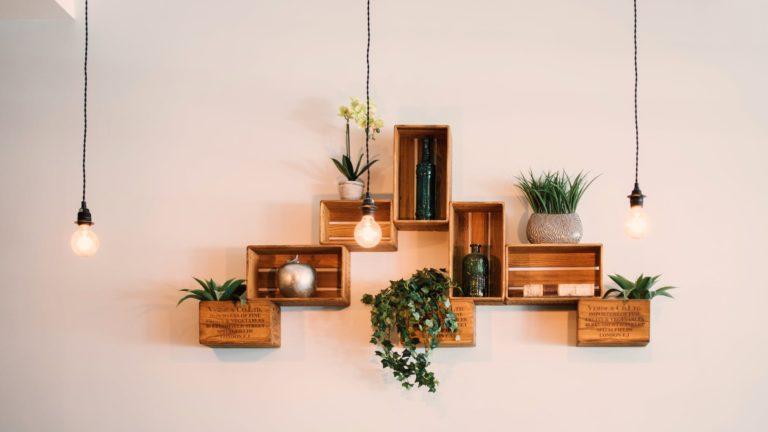 kistjes en planten